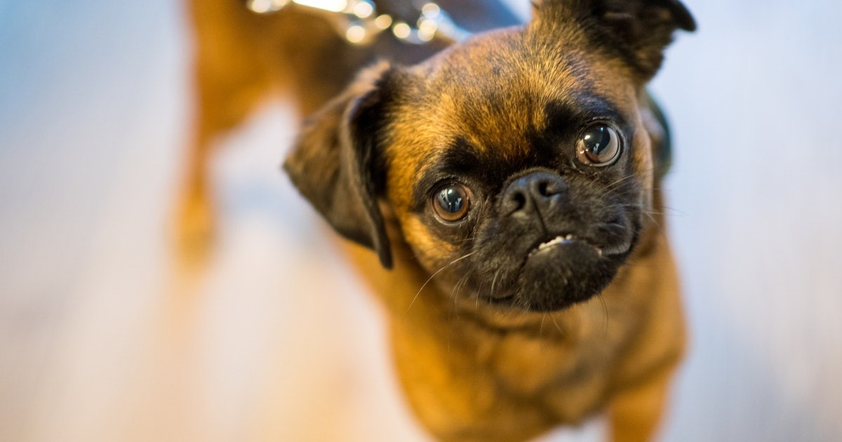 The Best Low-Maintenance Dog Breeds for Busy People