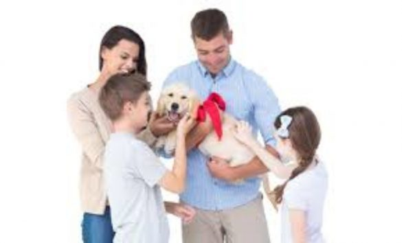 New Dog Owners